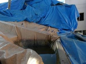 SMS Continua Limpeza Contra a Dengue 4