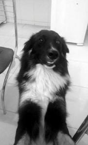 Cão Desaparecido em Três Pontas Scott 1