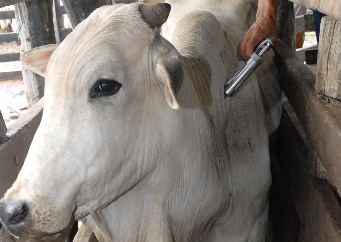 IMA Três Pontas promove campanha de vacinação contra a Brucelose e Tuberculose Animal 1