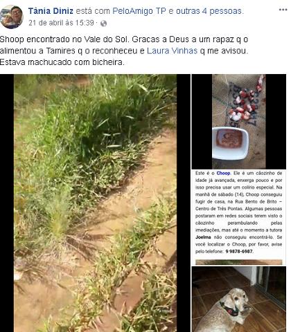 Publicação em rede social com final feliz para o cachorrinho Choop