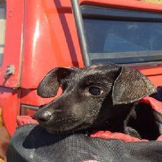 imagem cão salvamento CBMMG em Varginha