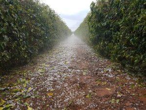Chuva granizo cafezal Sul de Minas